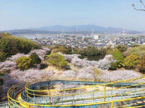 岡岳公園お花見