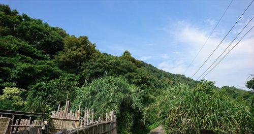 湯島を散歩