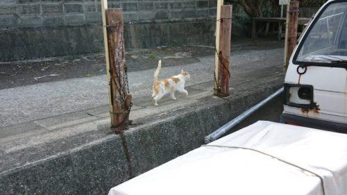 熊本の猫島
