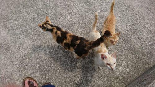 九州の猫島