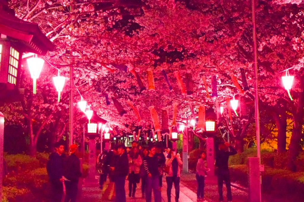 八代宮参道の夜桜ライトアップ