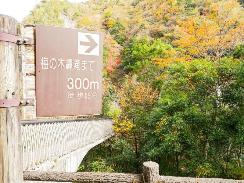 梅の木轟の滝
